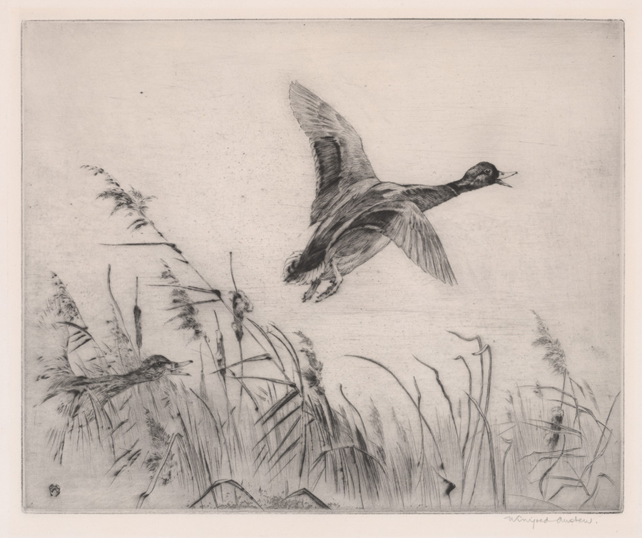Winifred Marie Louise Austen (1876 - 1964) Etching