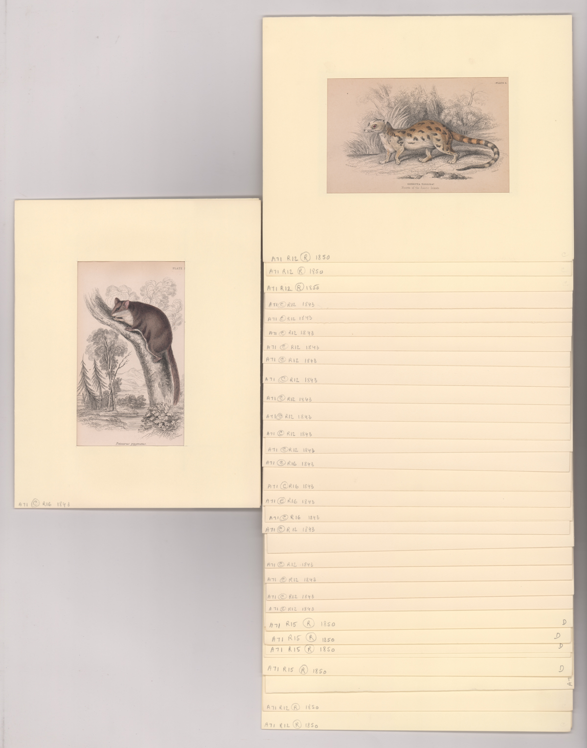 [31] Book Plates of Various Small Animals 1843-50