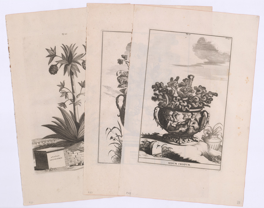 18th-Cent. A. Munting Medicinal Herbal Prints (3)